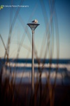 Gulls-on-lamp_2336-2-2RLwarmmshp-re2.jpg